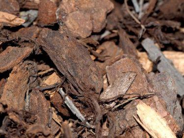 Pine - Landscape Mulch