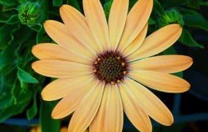 sunlight for plants